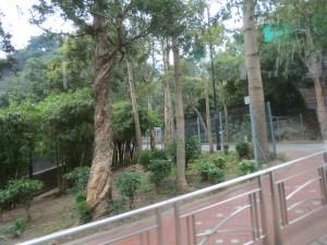 hong-kong_053
