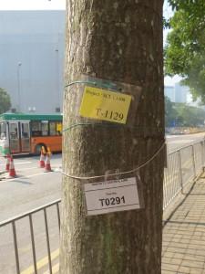 hong-kong_402