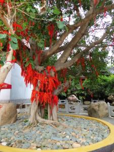 nanshan-temple_143