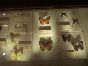 hong-kong-museums_041