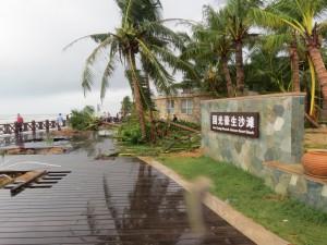 typhoon-haiyan_41