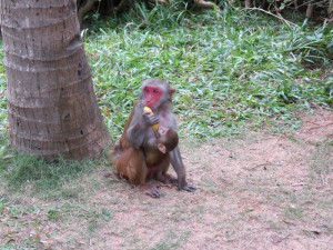 monkey-island_20