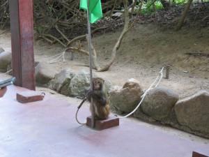 monkey-island_24