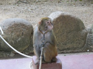 monkey-island_25