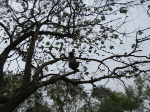 monkey-island_26