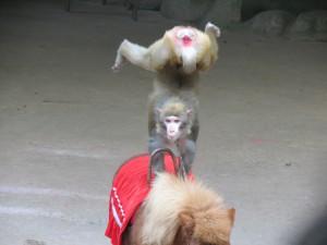 monkey-island_40