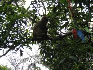 monkey-island_48