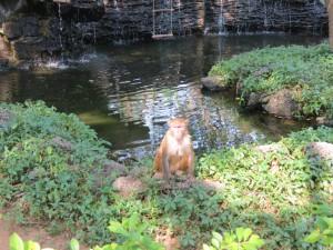 monkey-island_50