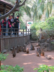 monkey-island_52