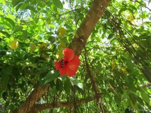 stone-flower_018