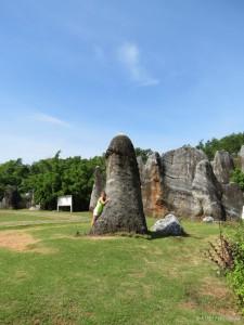 stone-flower_100