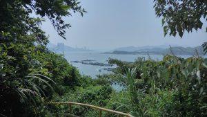 Вид на залив сквозь зелень