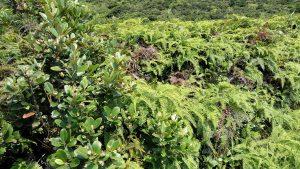 Мелкая зелень типа папоротника